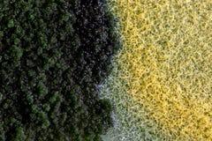 Характеристики колонии грибка и водорослей в чашка Петри для образования стоковое изображение rf