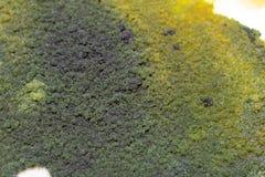 Характеристики колонии грибка и водорослей в чашка Петри для образования стоковое изображение