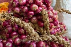 Характеристики сбора красных луков стоковое изображение