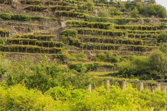Характерный viticultural ландшафт Carema, Пьемонта, его Стоковое фото RF