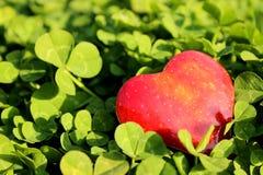 Харт Яблока стоковые изображения