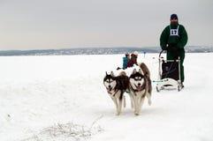 Харьков - январь 14: Гонки собаки скелетона Бега спортсмена dogsled на s Стоковые Фотографии RF