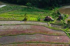 Хата Бали Стоковая Фотография RF