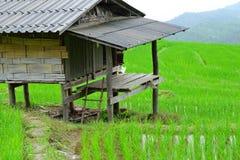 Хата в поле риса Стоковые Изображения RF