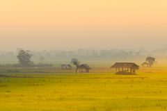 Хата в поле риса стоковое изображение rf