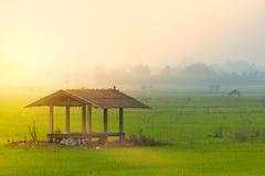 Хата в поле риса стоковое изображение