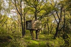 Хата дерева в лесе Стоковое Изображение