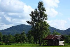 Хата и дерево Стоковая Фотография