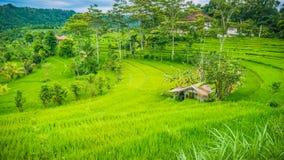 Хата между сочным зеленым цветом tarrace в Sidemen, Бали риса, Индонезии Стоковая Фотография RF