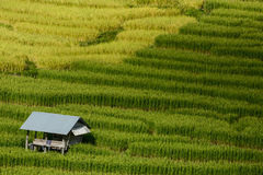 Хата на террасе риса Стоковое Изображение