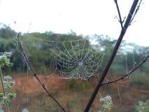 Хата паука Стоковое Фото