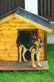 хата собаки Стоковые Фотографии RF
