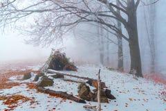 Хата сделанная от стоек листьев и ветвей в луге Стоковые Фотографии RF