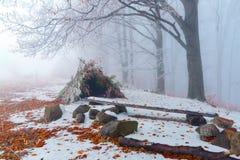 Хата сделанная от стоек листьев и ветвей в луге Стоковые Изображения
