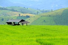 Хата фермера оставаясь на зеленых рисовых полях Стоковая Фотография