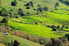 Хата ` s фермера на высокой горе с ield риса Стоковые Изображения RF