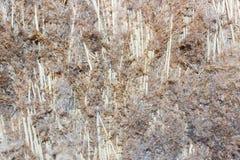 Хаты заводов болота Стоковое Изображение RF
