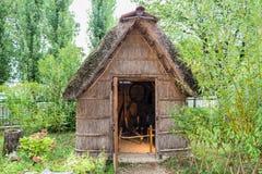 Хаты заводов болота Стоковые Фото