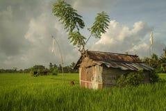 Хаты работника террасы риса на поле в Бали Стоковые Фото