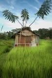 Хаты работника террасы риса на поле в Бали Стоковое Фото