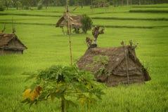 Хаты работника террасы риса на поле в Бали Стоковая Фотография RF