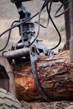 хватая древесина Стоковые Фото