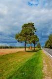 Хвойное дерево на дороге Стоковые Изображения RF