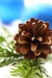 Хворостина вечнозеленой ели Стоковая Фотография