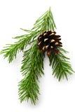 Хворостина вечнозеленой ели Стоковое Фото