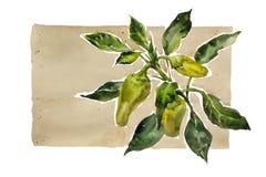 Хворостина виньетки сада акварели зеленая и желтая паприки с le Стоковые Изображения