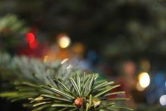 Хворостина ели рождества стоковая фотография rf