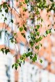Хворостина зеленых дерева и многоквартирного дома березы Стоковое Изображение