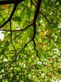 Хворостина и листва Стоковая Фотография