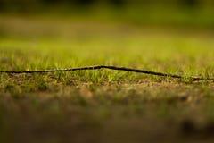 Хворостина на траве Стоковая Фотография