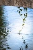Хворостина отражая в воде Стоковое Изображение