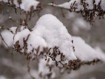 Хворостина с сухими листьями на белой предпосылке стоковое фото rf
