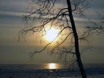 хворостины вала солнца Стоковые Фотографии RF
