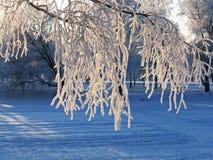 Хворостины в изморози - предпосылке Стоковые Фото