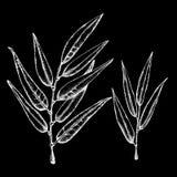 Хворостины дерева вербы и лавра Графическая иллюстрация в методе pointe Дизайн косметик, предпосылок, обоев, иллюстрация штока