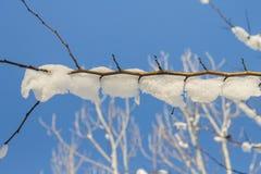 Хворостины дерева покрытые изморози и снега на предпосылке выигрыша Стоковые Изображения