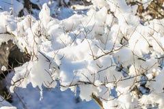 Хворостины дерева покрытые изморози и снега на предпосылке выигрыша Стоковое фото RF