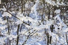 Хворостины дерева покрытые изморози и снега на предпосылке леса зимы в снеге Стоковые Изображения RF