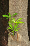 Хворостины деревьев Стоковое Изображение RF