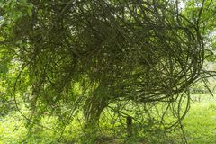 Хворостины и ветви и меньшие листья стоковое фото