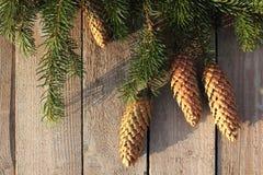 Хворостины и конусы рождества елевые Стоковые Изображения