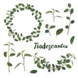 Хворостины и листья tradiscation в венке и гирлянде на белой предпосылке r бесплатная иллюстрация