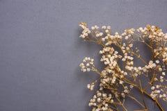 Хворостины малых белых сухих цветков весны на твердой серой предпосылке в винтажном стиле Концепция здоровья дня матерей пасхи Стоковое Изображение RF