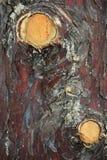 Хворостины на дереве Стоковая Фотография