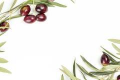 Хворостины оливкового дерева стоковое фото rf
