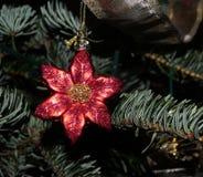 Хворостины орнамента и ели рождества Стоковые Изображения RF